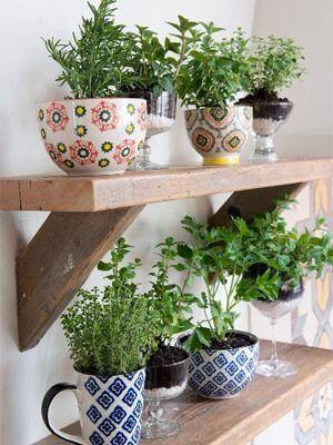Decoração com Plantas: Cor e Vida Para Casa! 4