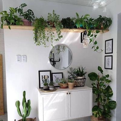 Canto da sala decorada com plantas diversas.