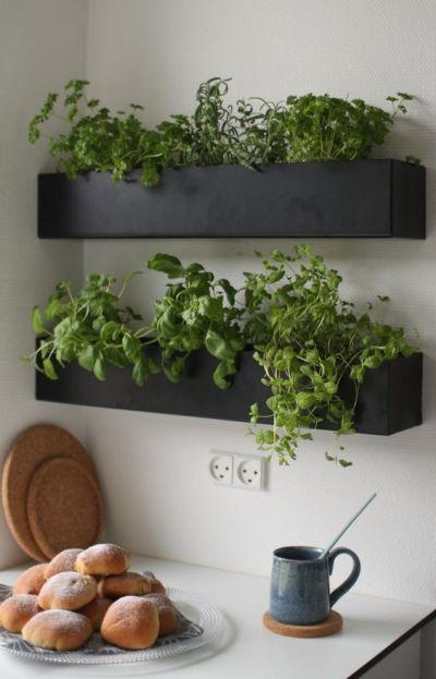 Decoração com plantas: horta suspensa na cozinha