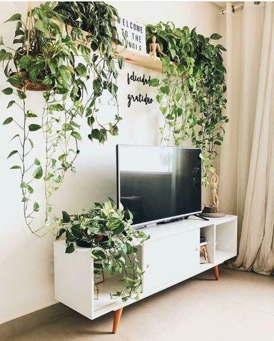 Plantas para apartamento