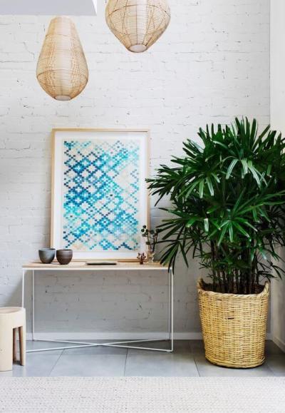 Plantas para apartamento: palmeira rafis