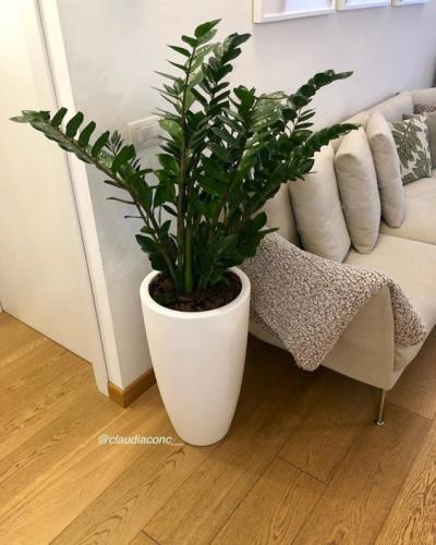 Plantas na sala - plantas para apartamento