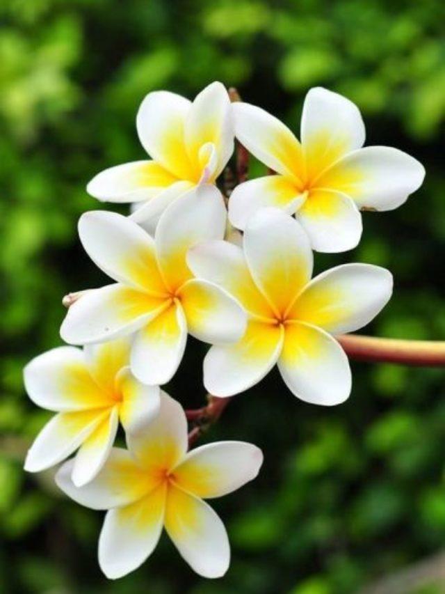 5 Plantas Resistentes ao Sol