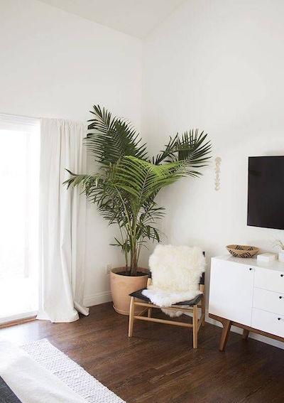 7 Plantas para Apartamento Pequeno