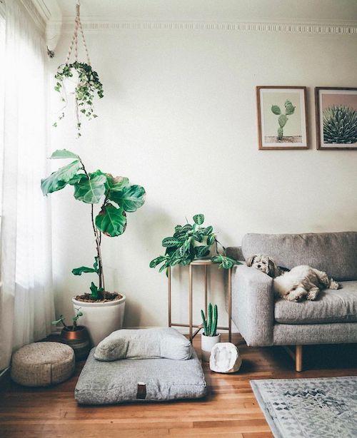 Espaço zen na sala com plantas