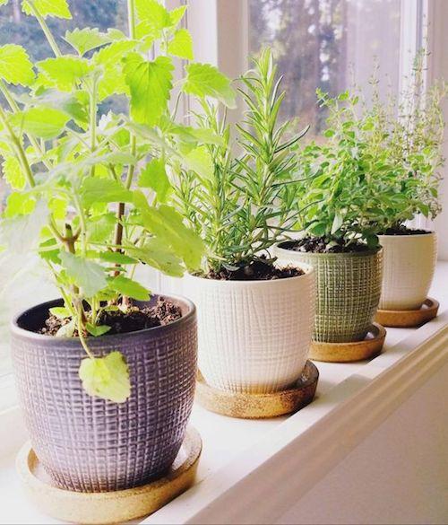 Horta em casa na janela em vasos pequenos