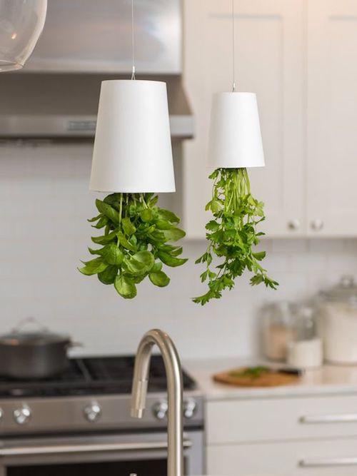 Horta suspensa sky planter