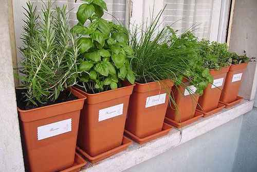 Horta em vasos pequenos na janela de casa