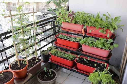Horts na varanda pequena de apartamento