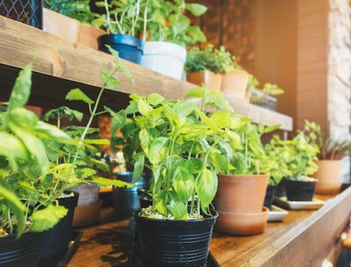 Horta em casa - pequenos vasos com hortaliças