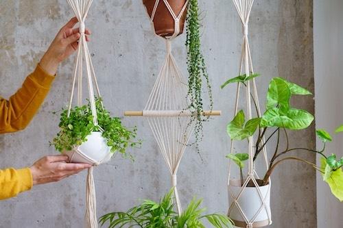 Planta suspensa com macramê