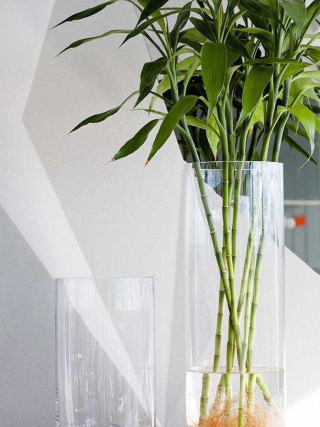 7 espécies de plantas para cultivar na água