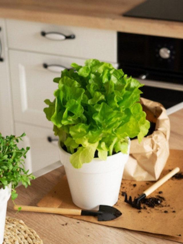Vasos auto irrigáveis: vasos para manter a sua horta viva!